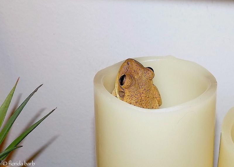 frog800fb1