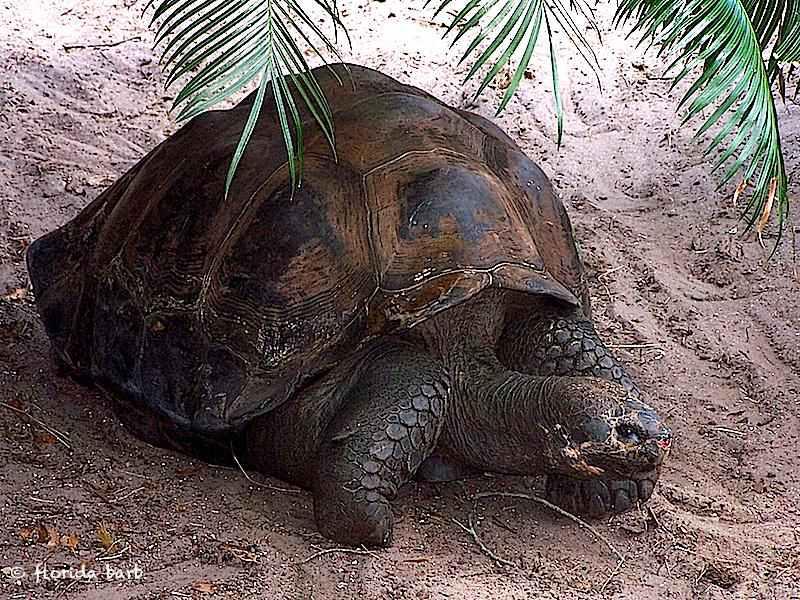 tortoise800fb