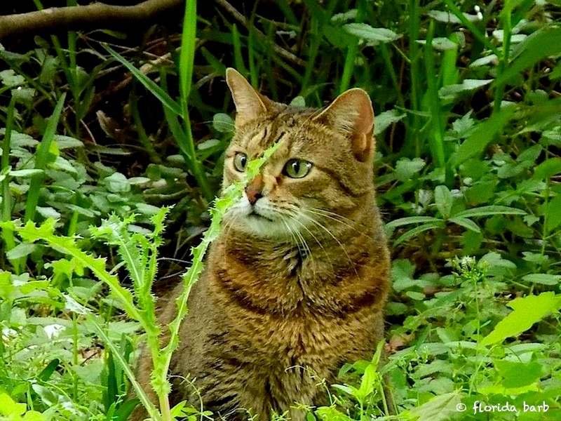 cat_tiger800fb4