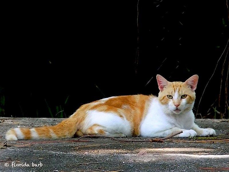 catwhite800fb5