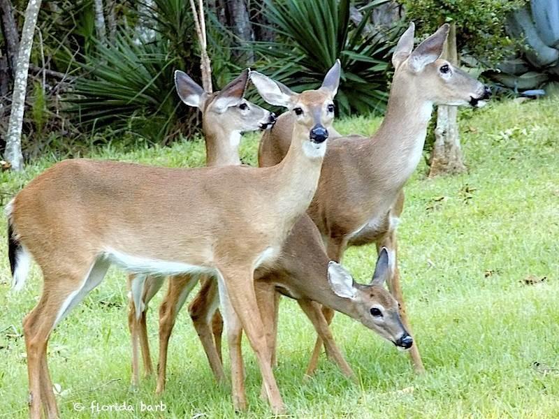 deer800FB2