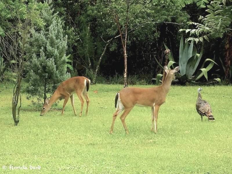 deer800fb2019