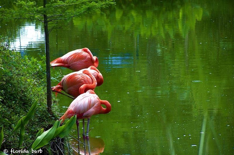 flamingorow800FB