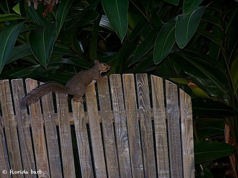 squirrelbench800fb