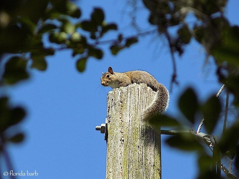 squirrelpole800fb1