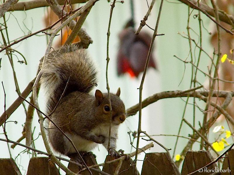 squirrelsvines